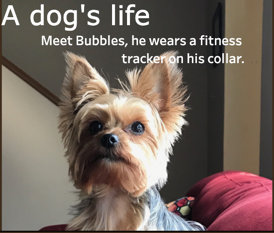 Dogs and fitness trackers…